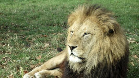 PLR dos bancários tem 'mordida' menor do leão