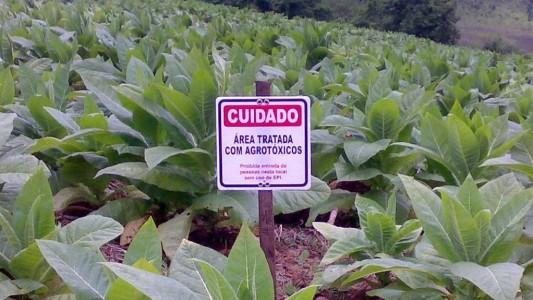 Agrotóxico aumenta em 41% risco de câncer