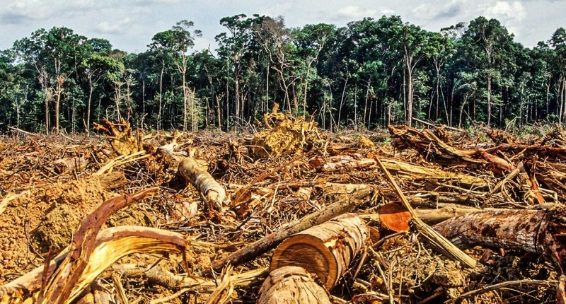 Bancos privados brasileiros financiam o desmatamento