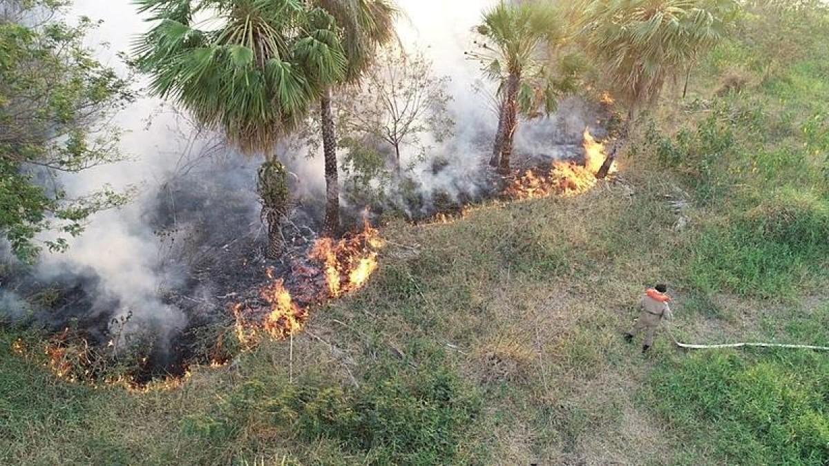 Comparação: Governo reduz verba de combate às queimadas em 2021