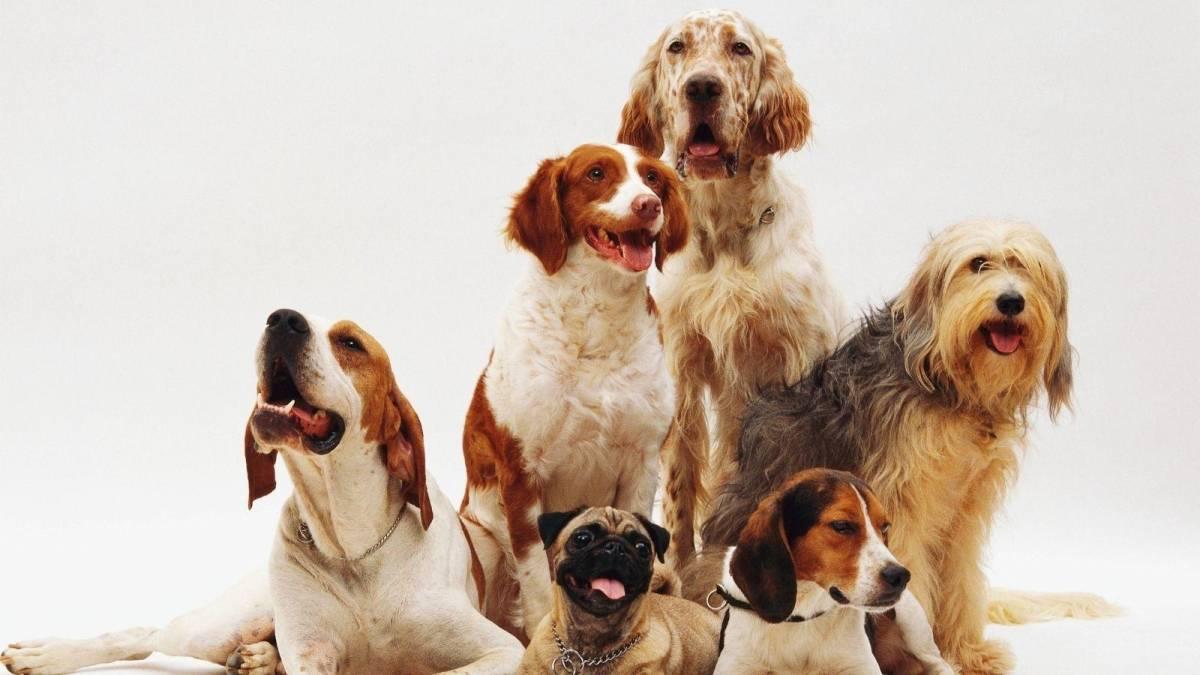 Juiz condena ex-marido a pagar metade das despesas dos cães