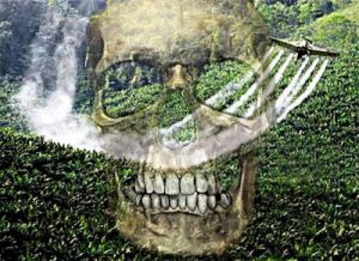 Anvisa quer proibir dois agrotóxicos no Brasil