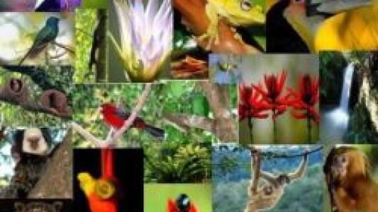 Biodiversidade e democratização dos recursos ambientais