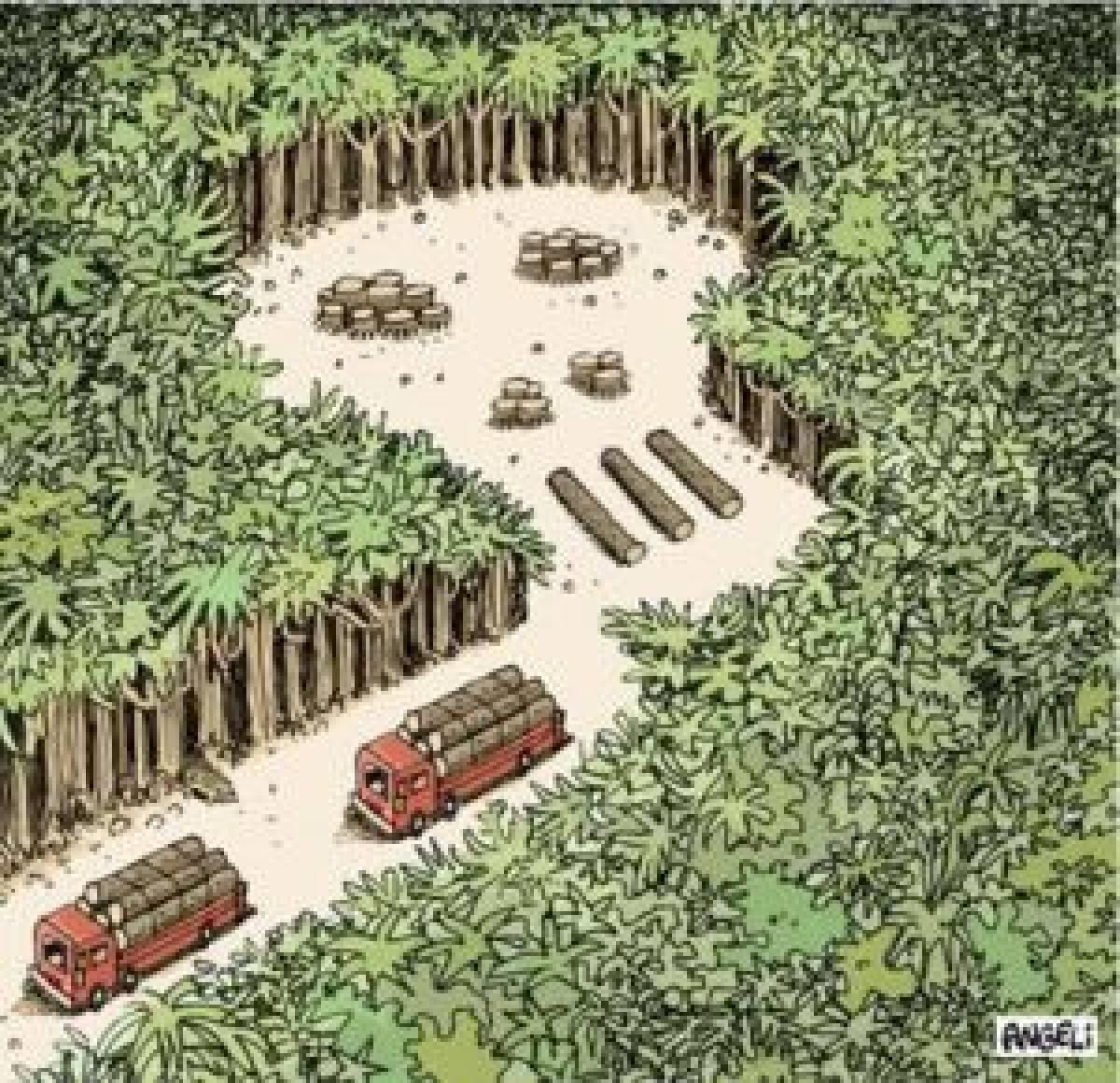 Novo Código Florestal deve anistiar 75% das multas milionárias